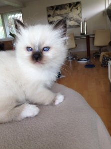 Melody, 6 weeks