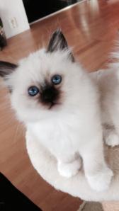 Puma, 7,5 weeks