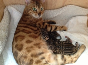 Frøyas litter- newborn