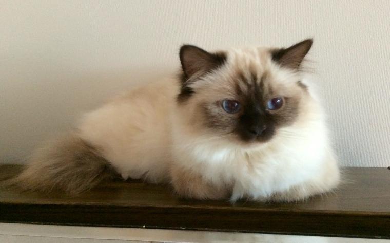 Maja, 14 months