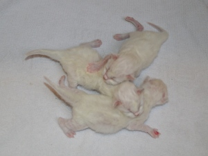 The litter, 3 days old