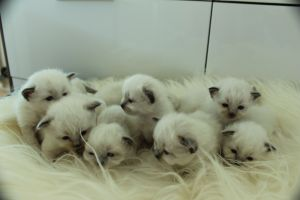 The whole bunch- together with Akinas litter