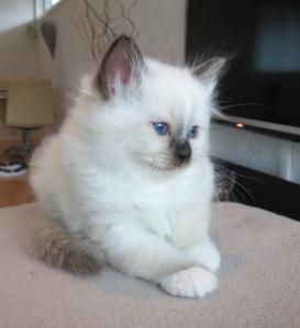 Kenzo, 6 weeks