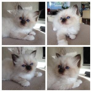 Foxy, 6 weeks