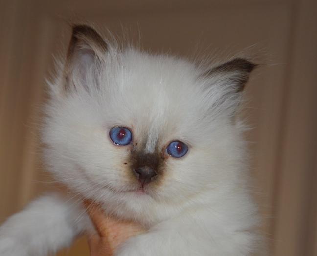 Aslan, 5,5 weeks