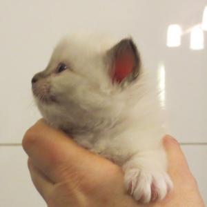 Emine, 4 weeks