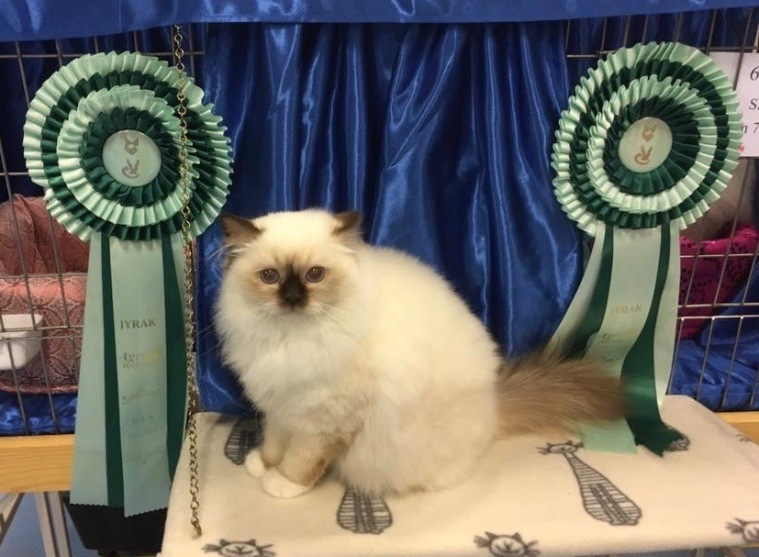 HAVANA, BEST in Show 09.04 og 10.04.2016