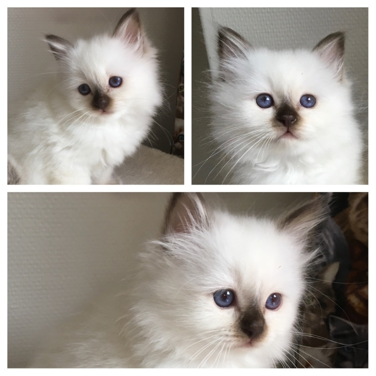 Calida, 2 months